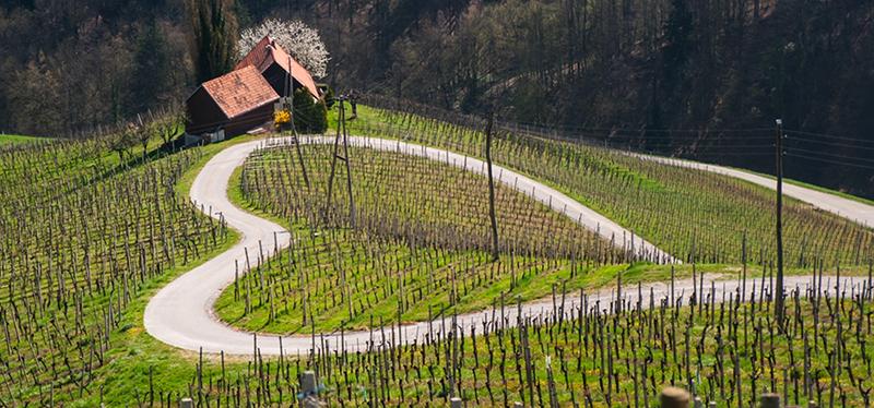 Sloveense Wijnen TeamTuesday client
